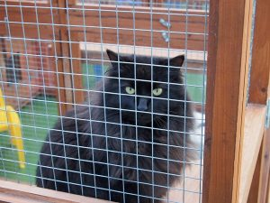 ringtail cattery