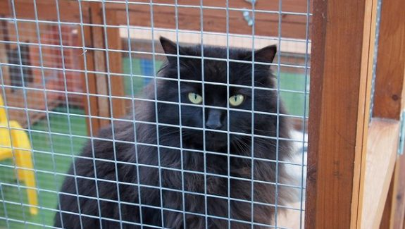 Ringtail Cattery, South Gloucestershire.
